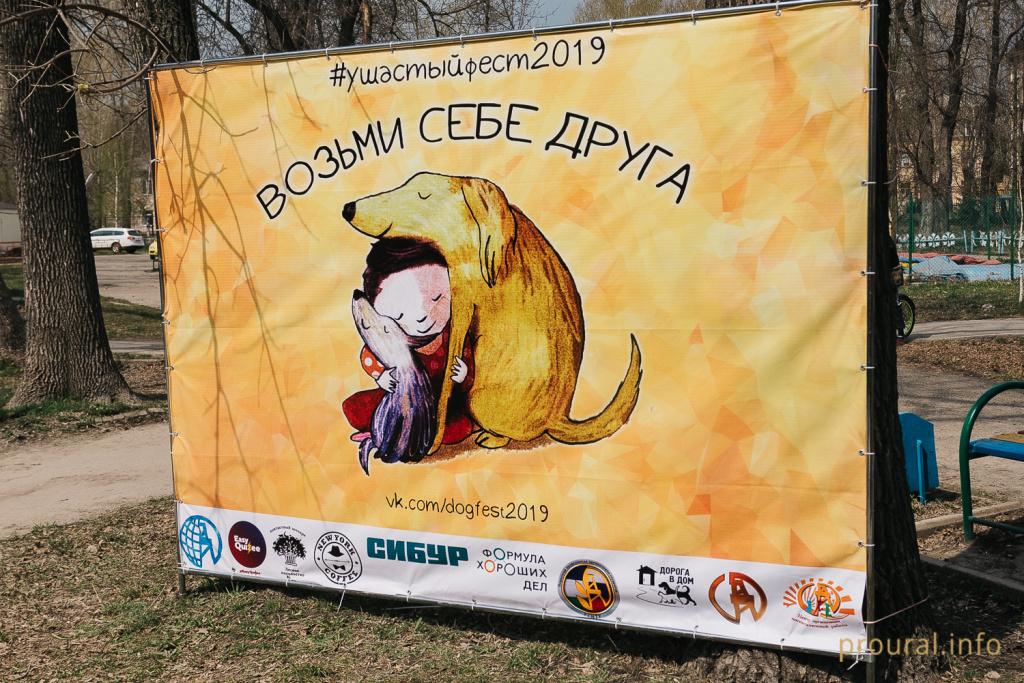 Студенты Башкирии организовали фестиваль и собрали 700 кг корма для бездомных собак